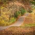 Fall Path by Thomas Young