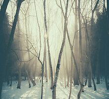 Peaceful Forrest by parkway5