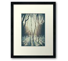 Peaceful Forrest Framed Print