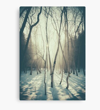 Peaceful Forrest Canvas Print