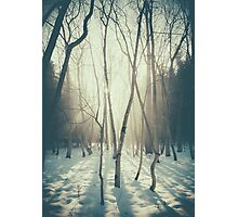Peaceful Forrest Photographic Print