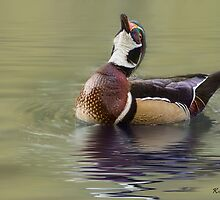 Wood Duck Display by KatMagic Photography