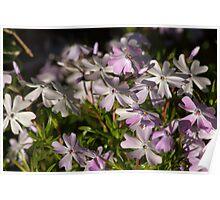 Spring Mauve Poster