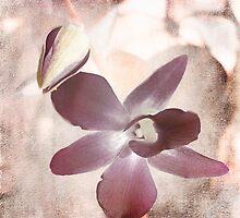Orchid in Pastels by Ellen Cotton
