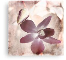 Orchid in Pastels Canvas Print