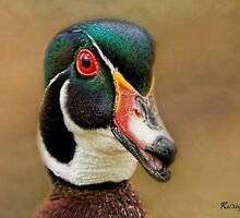 Wood Duck Portrait by KatMagic Photography