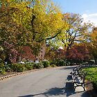 Metropolitan Oval In Autumn by W. Lotus