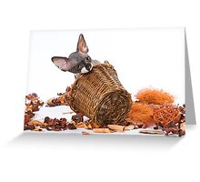 Charming kitty cat sphynx without hair Greeting Card