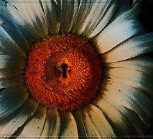 Sunflowerlock by mslisko