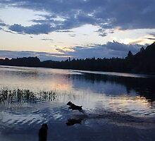▂ ▃ ▅ ▆ █  Sunset-Dogs-Canine Midnight Rendezvous  █ ▆ ▅ ▃ by ✿✿ Bonita ✿✿ ђєℓℓσ