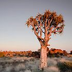 Morning Glow - Keepmanshoop Namibia Africa by Beth  Wode