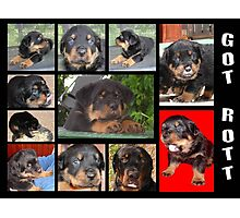 Rottweiler With Got Rott? Message Collage Photographic Print