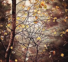 Last days of Autumn by Anne Staub