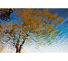 Flowing tree 2 Photographic Print