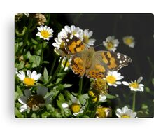 Meadow Argus on Chalet Daisies Metal Print