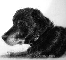 Pooch 2 by Damian May