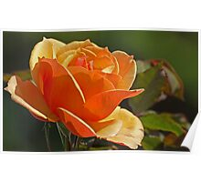 Citrus Rose Poster