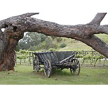Wagons and wine at Currency Creek Photographic Print
