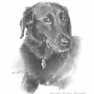 black lab portrait drawing by Mike Theuer