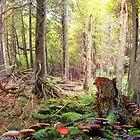 Forest Mushrooms by Igor Zenin