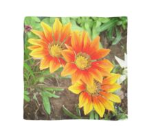 Three Bright Colored Gazania Flowers and Garden Scarf