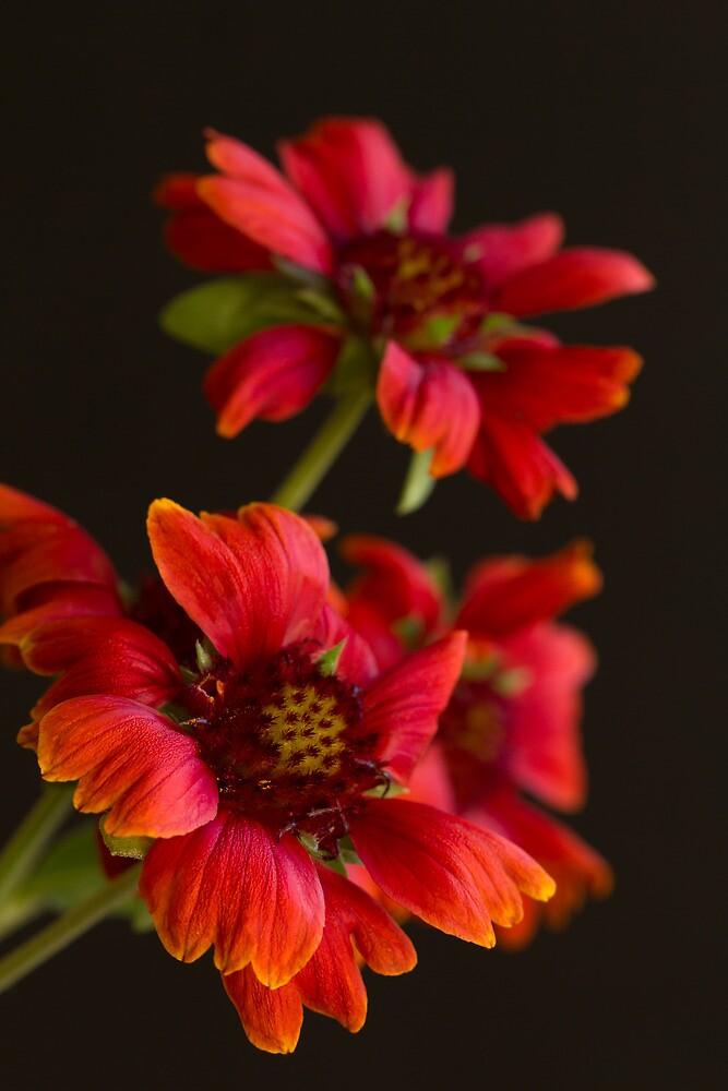 Floral Simplicity by Lynn Gedeon