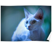 Devon Rex Cat (LX Poster) Poster