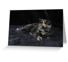Milly - Tortie Tabby Exotic Shorthair Cat Greeting Card