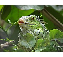 Chanting Chameleon Photographic Print