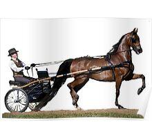 Half Arabian Pleasure Driving Horse  Poster