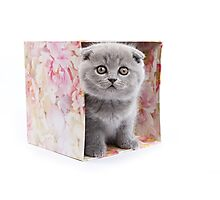 Fluffy funny gray kitten British cat Photographic Print