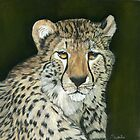 Cheetah by Sarahbob