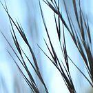 Blue Evening Sweeps by David Rozario