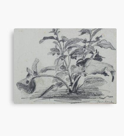 Pencil sketch - burdock  Canvas Print