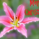 Merry Christmas lily card by cclaude
