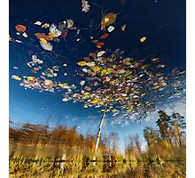 Reflection Tree Photographic Print