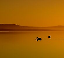 Pelican Sunset 01 by kevin chippindall