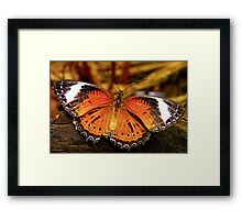 Orange Lacewing Butterfly Framed Print