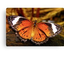 Orange Lacewing Butterfly Canvas Print