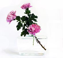Unusual Reused Plastic Vase with Chrysanthemum by patjila