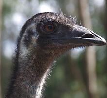 Emu by lezvee