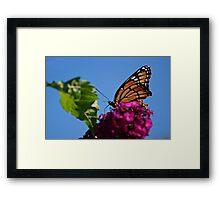 Monarch On Butterfly Bush Framed Print