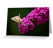 Butterfly Bush With Butterfly Greeting Card