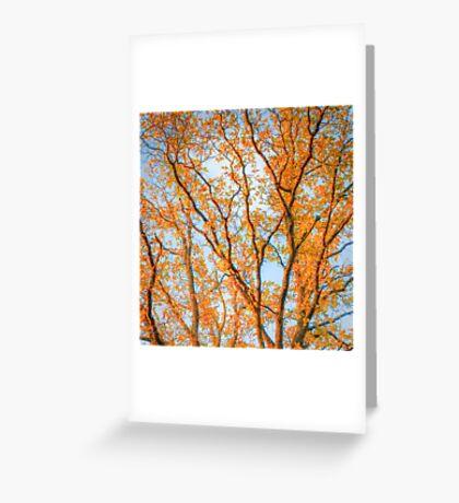 Orange tree tops Greeting Card