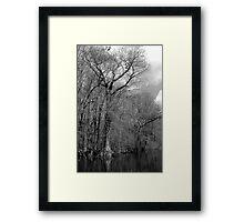Riverton Cypress Framed Print