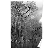 Riverton Cypress Poster