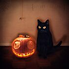 The Witches Cat by Bethany Holland