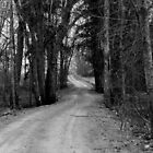 The Best Roads in Life  by Kathleen Daley