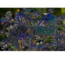Lysergic Asters Photographic Print