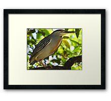 Heron, Brazil Framed Print